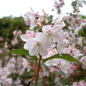 Arbusti da fiore